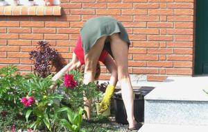 Домохозяйка в огороде без трусиков к короткой юбке - фото #10